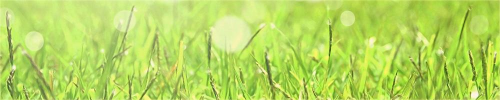 main_grass_img